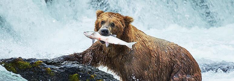 Alaska Contractors License Bond