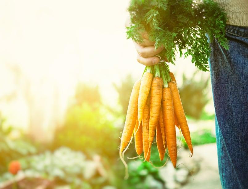 florida agricultural products dealer bond