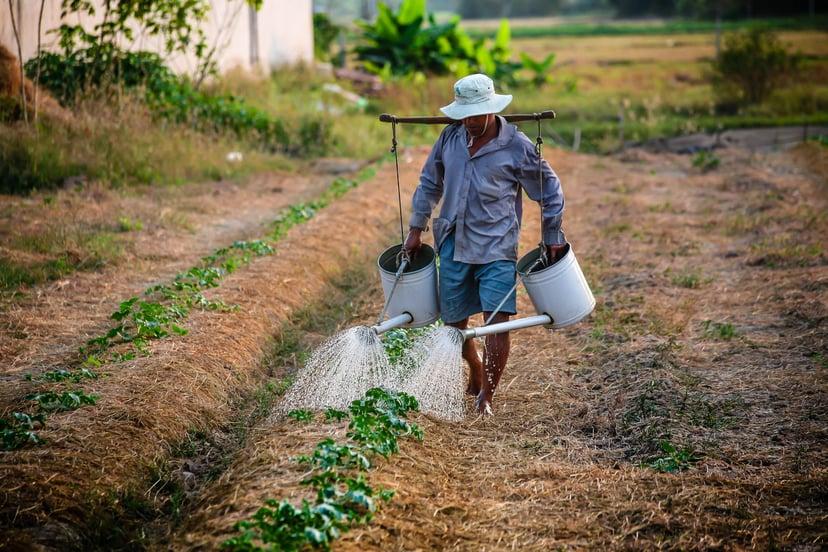california farm labor contractor